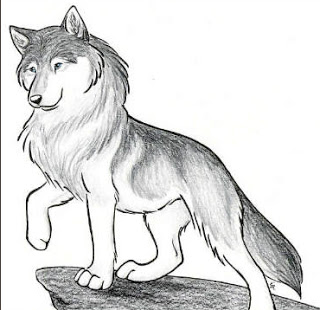 Animal jam drawings of arctic wolves for Animal jam arctic wolf coloring pages