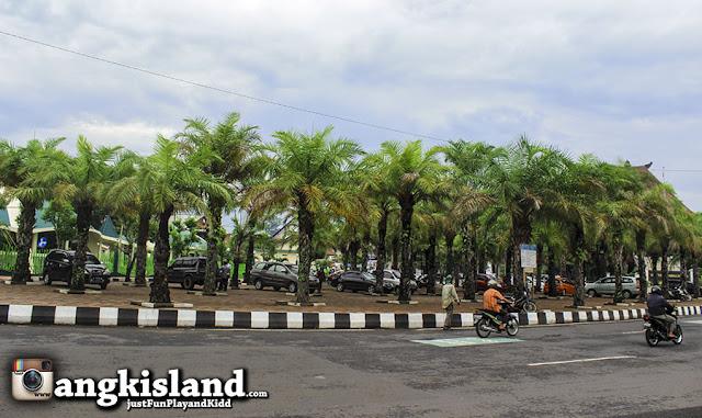 pohon kurma indonesia