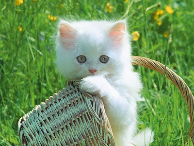 Cute little baby cat on white