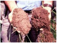オレゴンティルス農法の土
