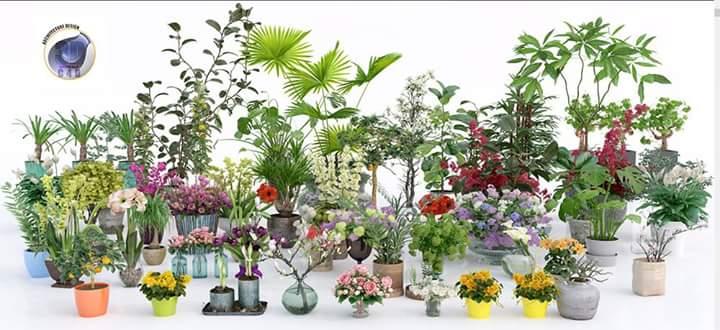 plant-set-05 vray c4d.lib4d
