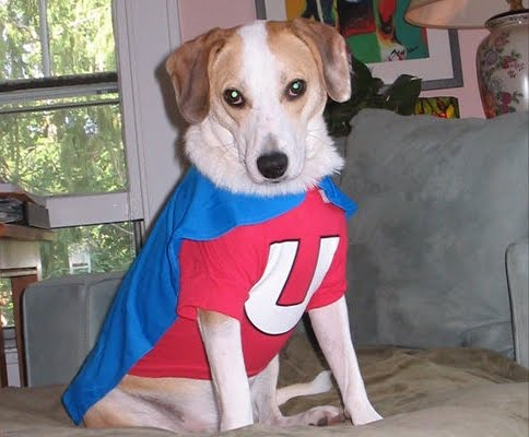 Cute Dogs Dressed As Superheroes 17 Pics Amazing Creatures