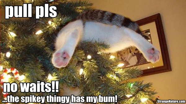 Funny wallpapersHD wallpapers: funny christmas animals