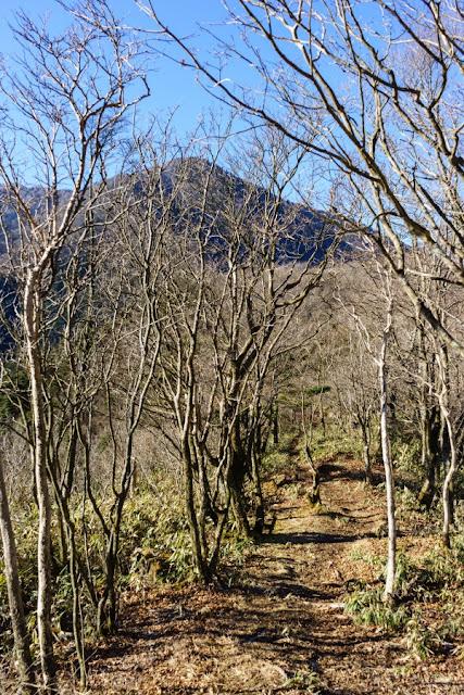 冬木立の尾根道~山梨百名山・竜ヶ岳