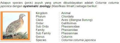 Klasifikasi Burung Puyuh