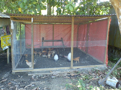 model kandang ayam kampung