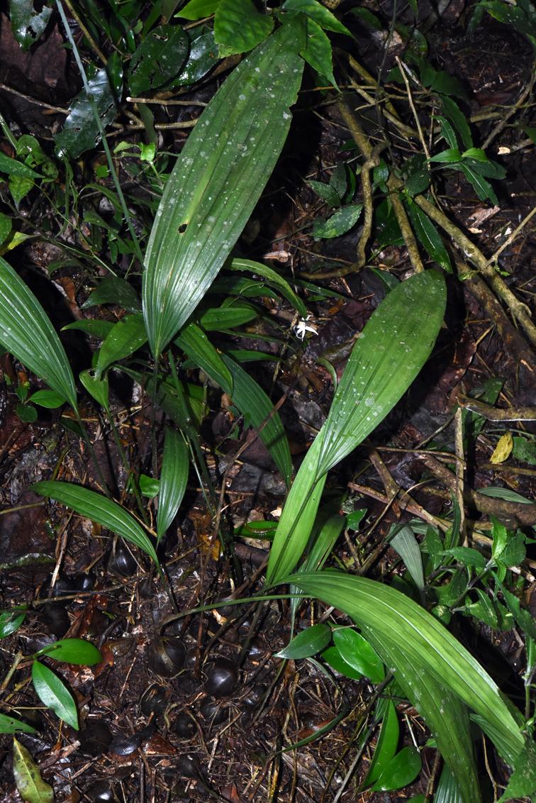 福星花園: 綠花安蘭