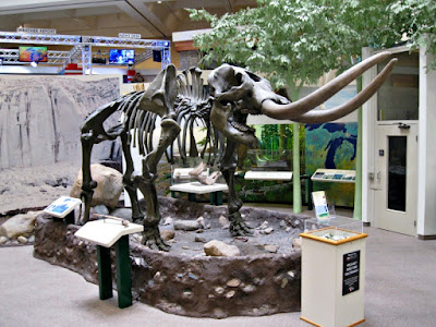 Midland Center for the Arts Skeleton