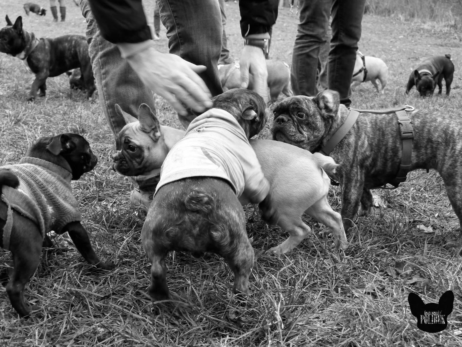 vlastnosti psů