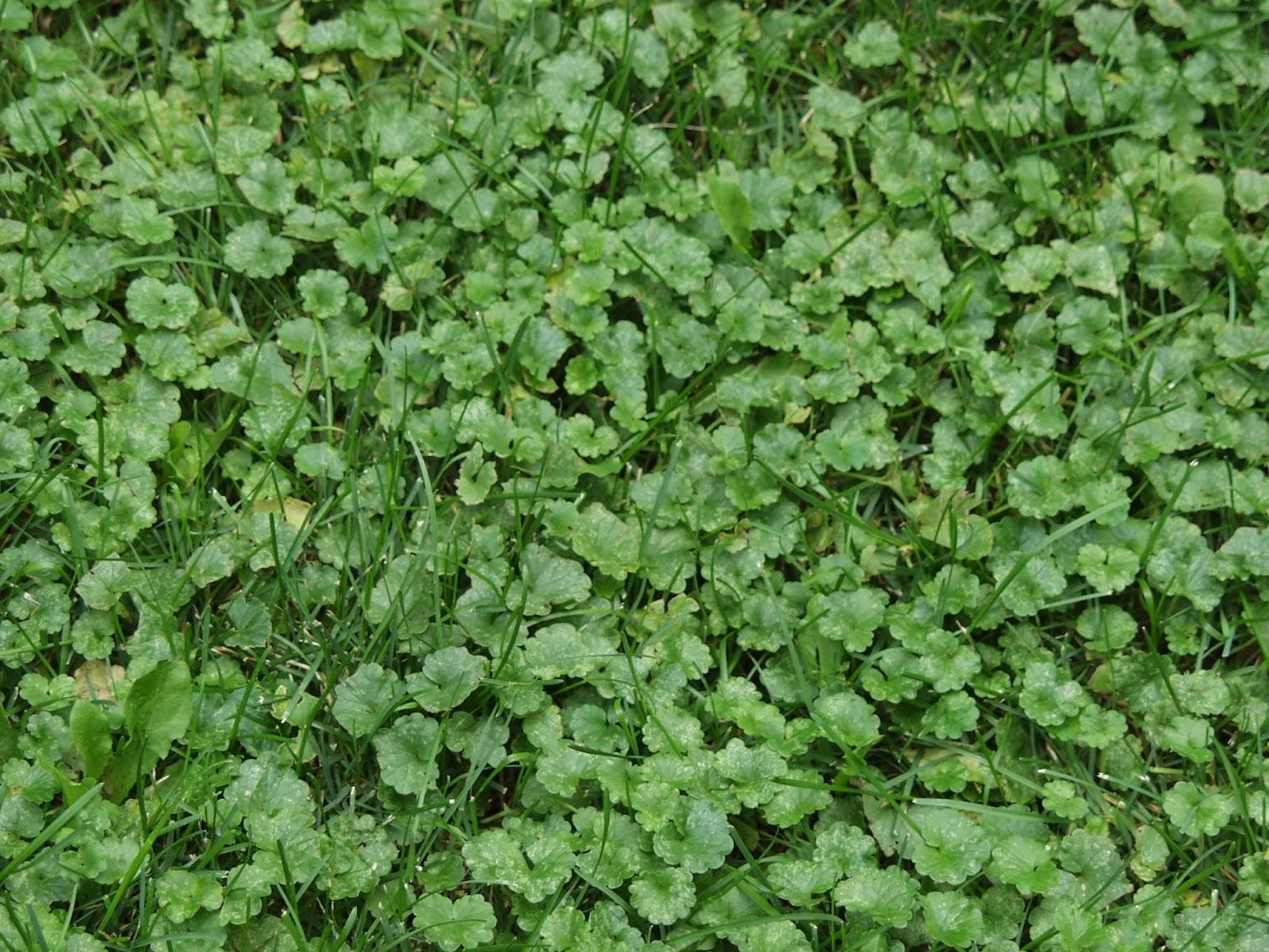 Ground%2Bivy%2B2 Crawling Houseplants on