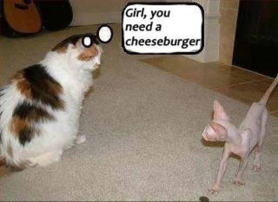 Funny Cat Cheeseburger Animal Photograph