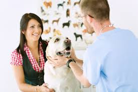 dog and vet