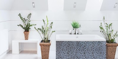 RULING ON PUTTING FLOWERS AND PLANTS IN THE BATHROOM