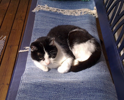 Miuku, kissa