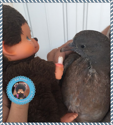 Nicolas le Kiki et Colombine le bébé pigeon - oisillon - pigeonneau  oiseau