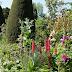 Hidcote Manor Garden II