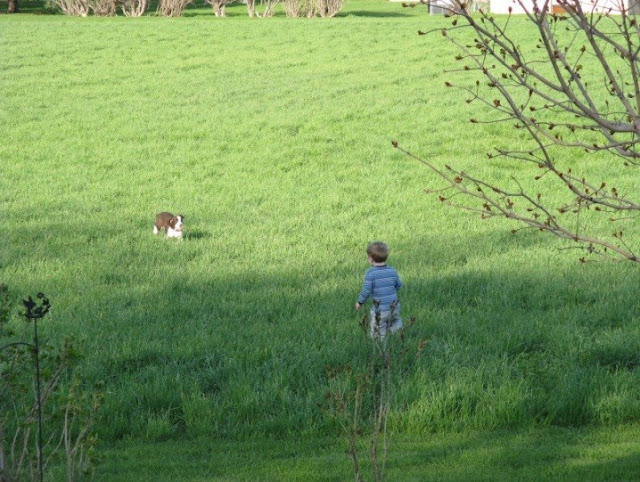 William and an English Springer Spaniel running in the field