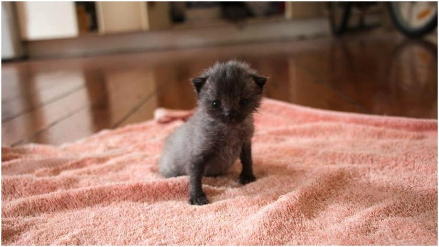 cute kitten's pet