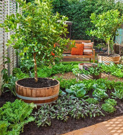 Vegetable garden in small spaces - Vegetable garden in small space decoration ...