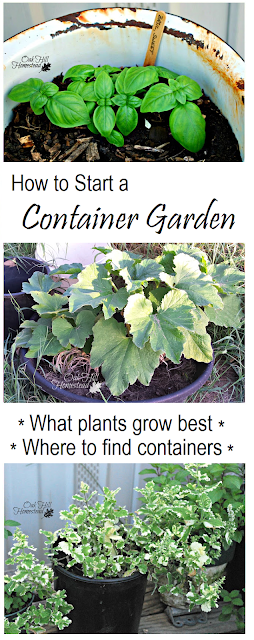 How to start a container garden, where to find containers and what plants will grow best - from Oak Hill Homestead