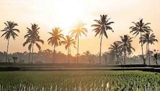 Tempat Wisata Menarik di Bali ubud