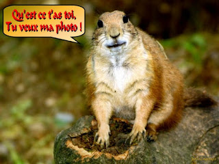 Fond ecran humour animaux fonds d 39 cran hd for Fond ecran amusant