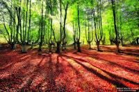 Bosque de Egiriñao