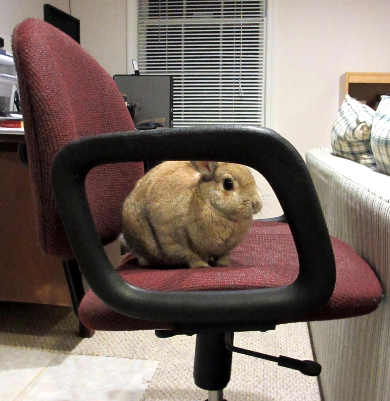 best tv watching chair for bathtub rabbit ramblings executive bunny bunya