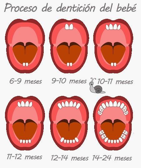Dentición en los bebés