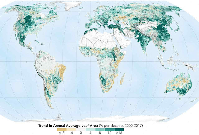 NASA: reverdecer do planeta deveu-se ao homem. O mapa só aponta o aumento de área verde. Áreas amarelada não mudaram.