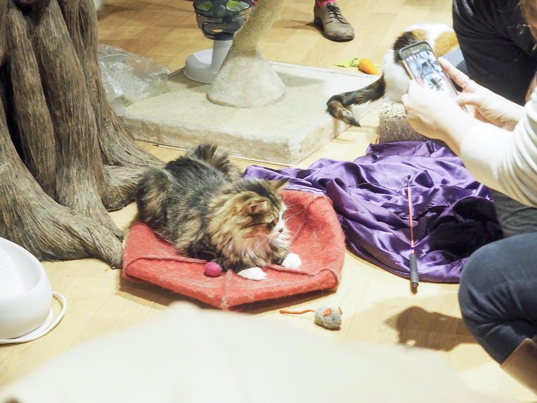 Lady Dinah's Cat Emporium cat