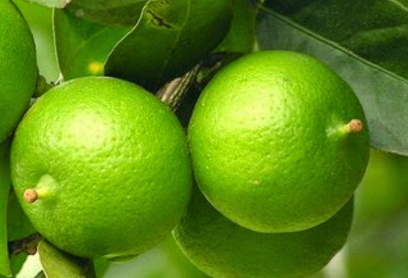 Cough Treatment With Lime