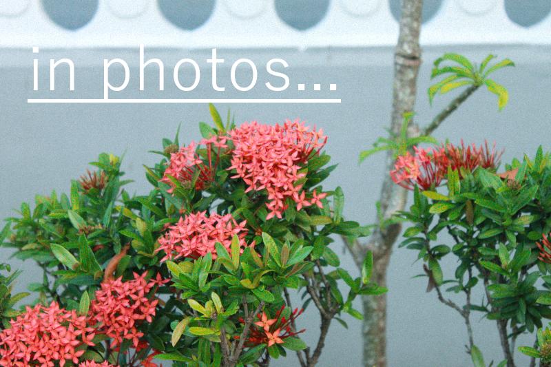 In Photos #1 Gotu Kola