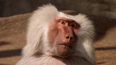 体を老化させる活性酸素は薄毛・白髪も促進!?