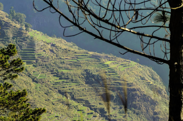 8TH WONDER TRAVEL DESTINATION HIDDEN FIDELISAN RICE TERRACES SAGADA Up Close