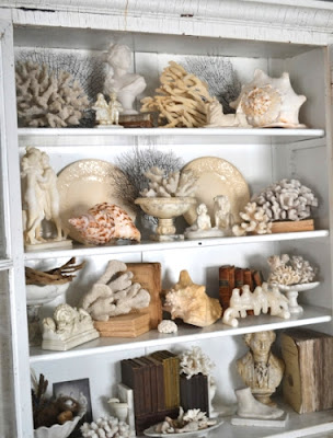 sea shell collection in glass cabinet