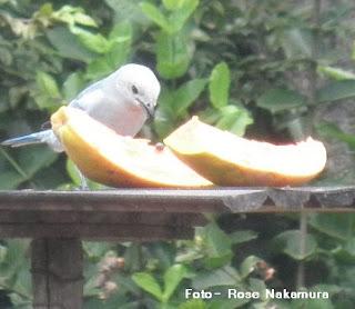 passarinho se alimentando