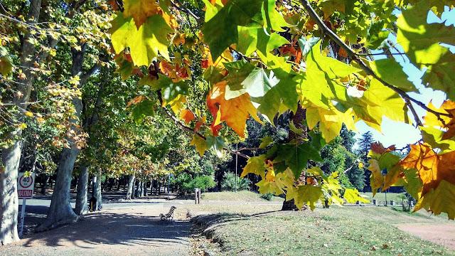Folhas outonais coloridas no Parque General San Martín.