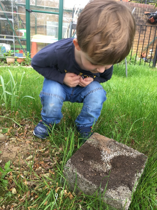 #MySundayPhoto-number-17-toddler-looking-at-ants-in-the-garden