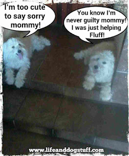 Buffy and Fluffy dogs not guilty.