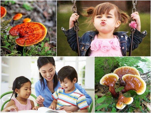 Dùng nấm linh chi chăm sóc sức khỏe của trẻ