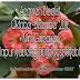 Segmen Bloglist Oktober-Disember + Mini Giveaway Ciklapunyabelog[dot]blogspot[dot]my.