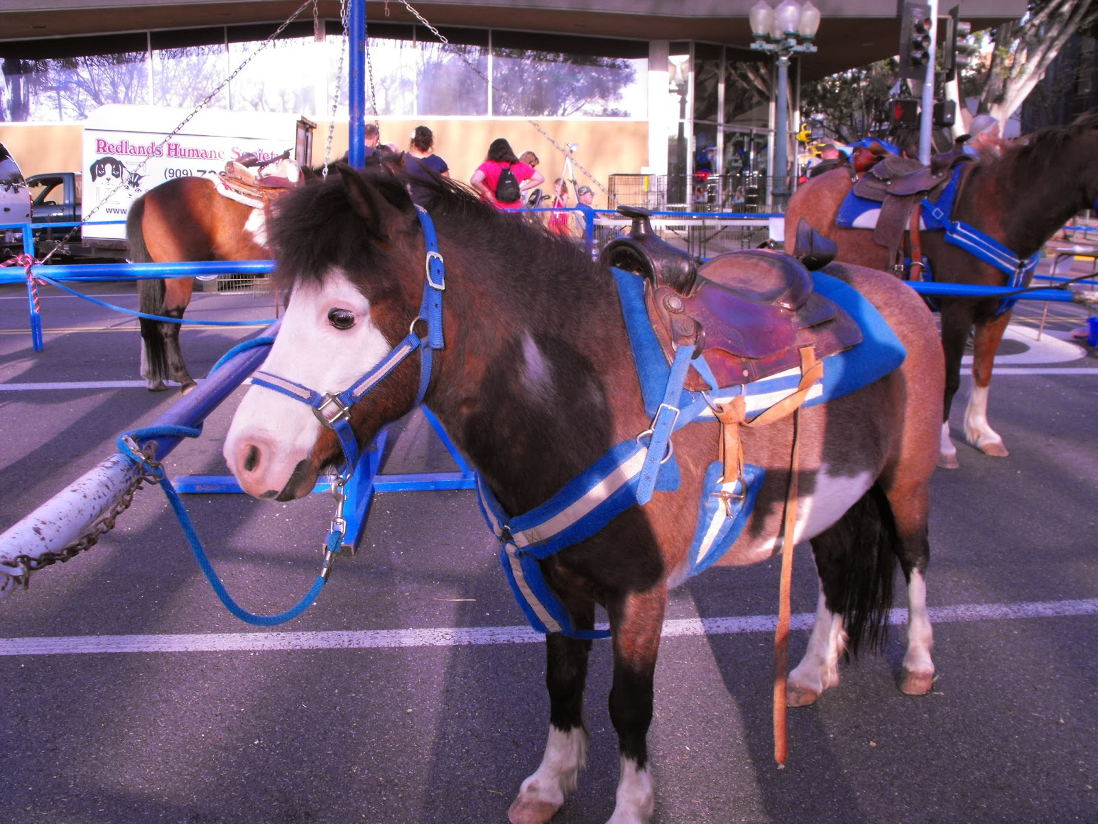 Becky's Pony Express - Pony Rides, Petting Zoo and Pony Parties