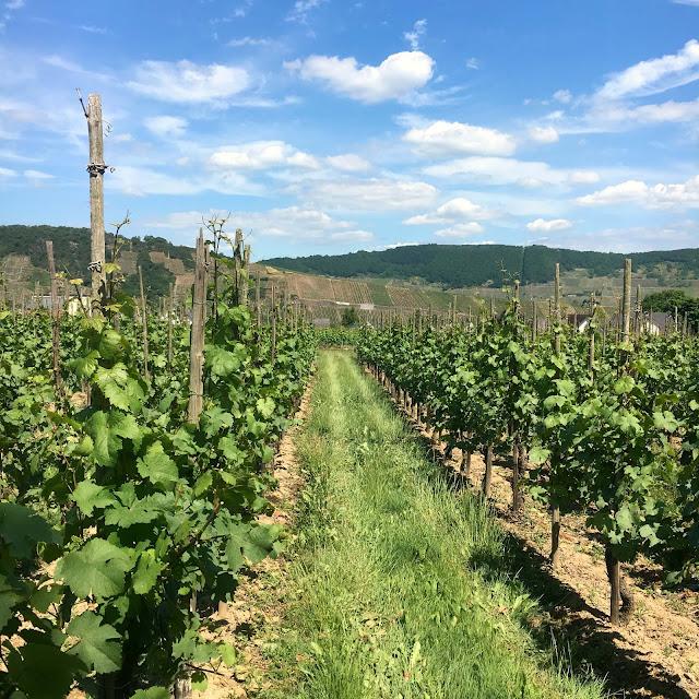 Wein, Riesling, Reise, mythosmoselhaus