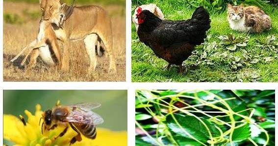 biologikubiologi kita Pola pola interaksi dalam ekosistem