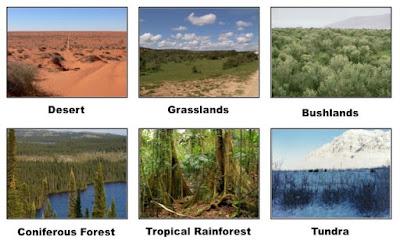 Tipe-Tipe Bioma di Bumi