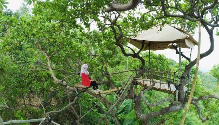 Lokasi Rute Menuju Rumah Pohon Goa Cocor Super Keren
