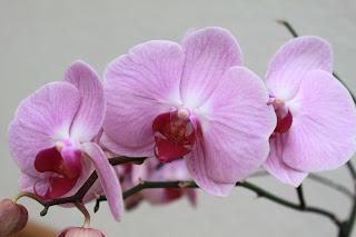 Blütenpracht Orchideen