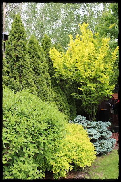 Kolory w ogrodzie - najważniejszy kolor to zielony!
