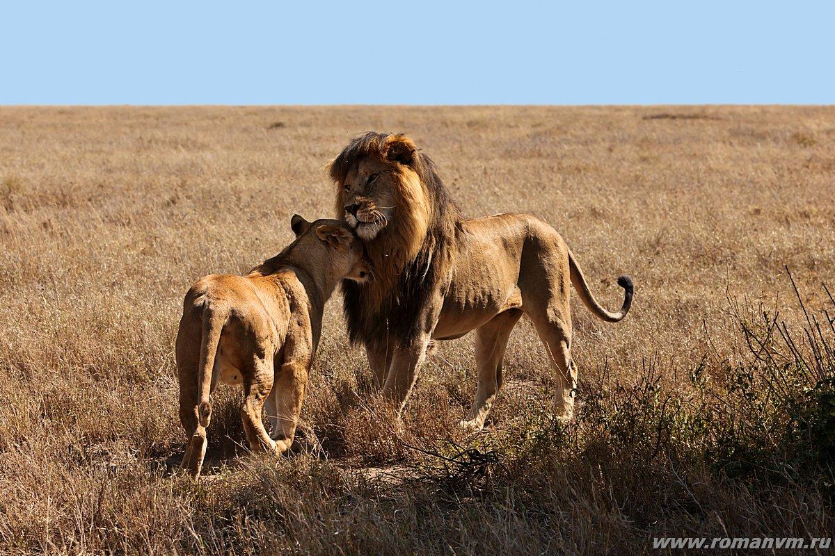 Animals in Love | Amazing Creatures